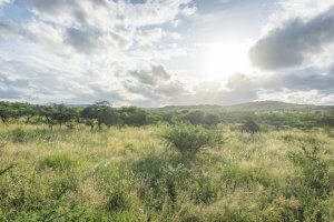 Suedafrika Phinda AndBeyond Private Game Reserve Safari