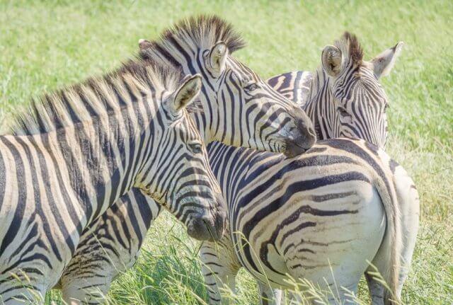Suedafrika Safari Hluhluwe Imfolozi Nationalpark