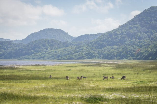 Suedafrika Safari iSimangaliso Wetland Park