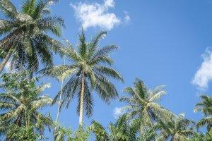Khao Lak Thailand Palmen Bambusrafting