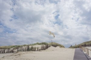 Insel Juist Nordsee Urlaub Duenen Moewe