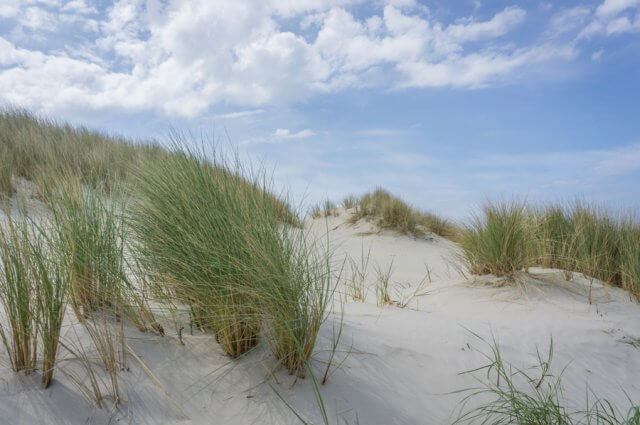 Insel Juist Nordsee Urlaub Duenenlandschaft
