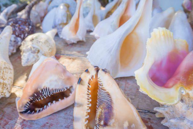 Mexiko Urlaub Rundreise Isla Holbox Muscheln