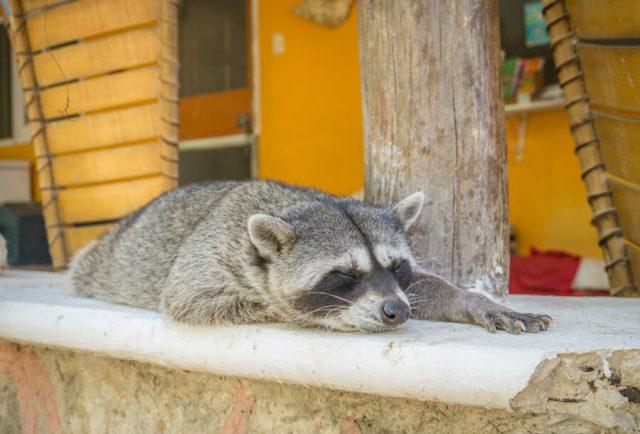 Mexiko Urlaub Rundreise Isla Holbox Tierheim