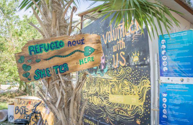 Mexiko Urlaub Rundreise Isla Holbox Tierheim Refugio