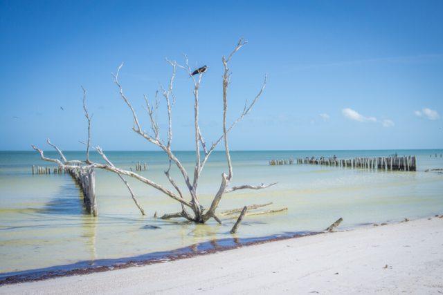 Mexiko Urlaub Rundreise Isla Holbox Vogelschutzgebiet