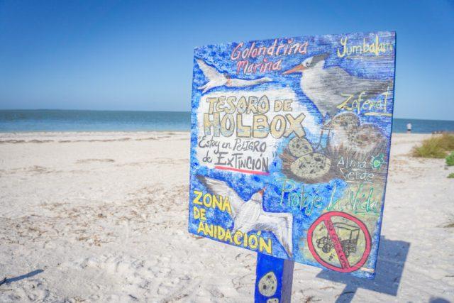 Mexiko Urlaub Rundreise Isla Holbox Zona de Anidacion