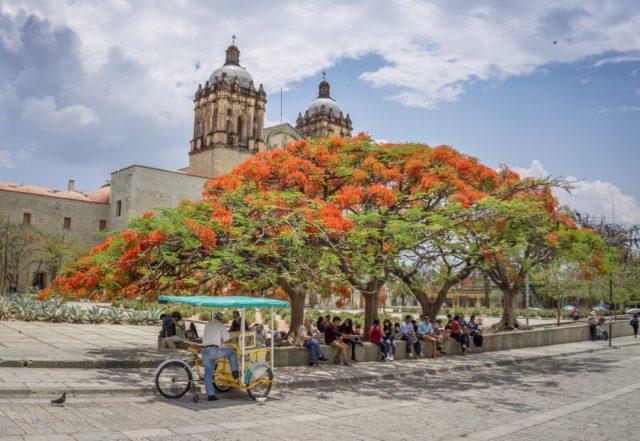 Mexiko Urlaub Rundreise Oaxaca de Juarez Flammenbaum