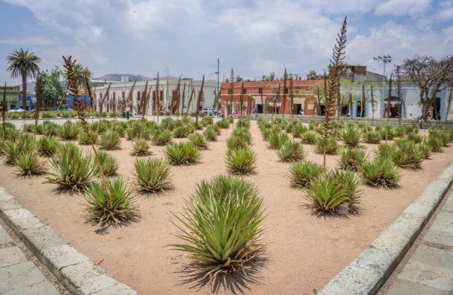 Mexiko Urlaub Rundreise Oaxaca de Juarez Kaktus