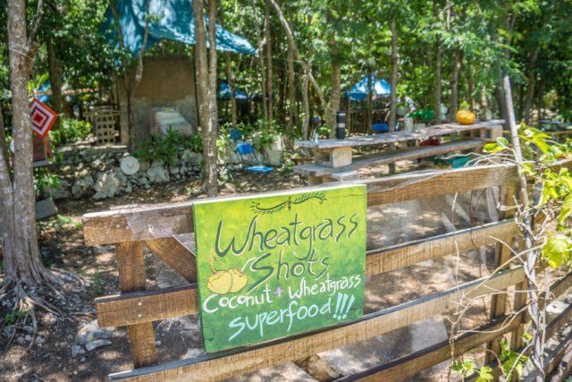 Mexiko Urlaub Rundreise Tulum Wheat Shots