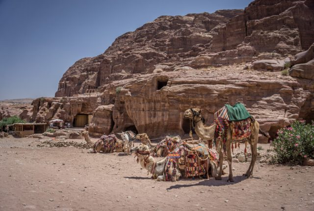 Felsenstadt Petra Jordanien Kamele