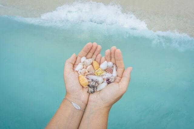 Malediven Inseln Reethi Beach Muscheln