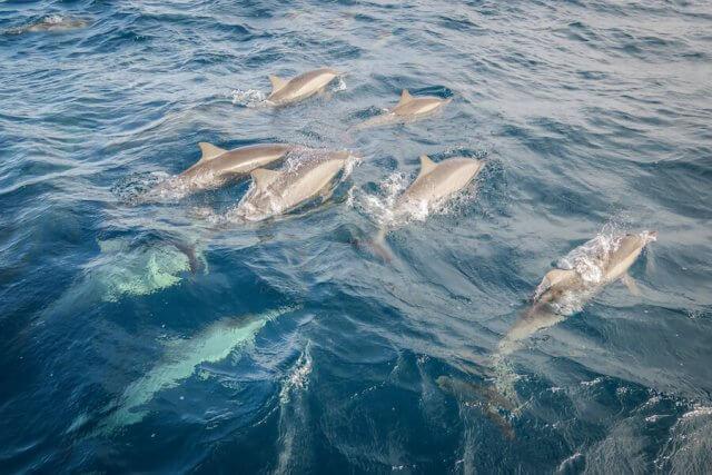 Malediven Reise Coco Palm Dhuni Sunrise Cruise DelfineMalediven Reise Coco Palm Dhuni Sunrise Cruise Delfine