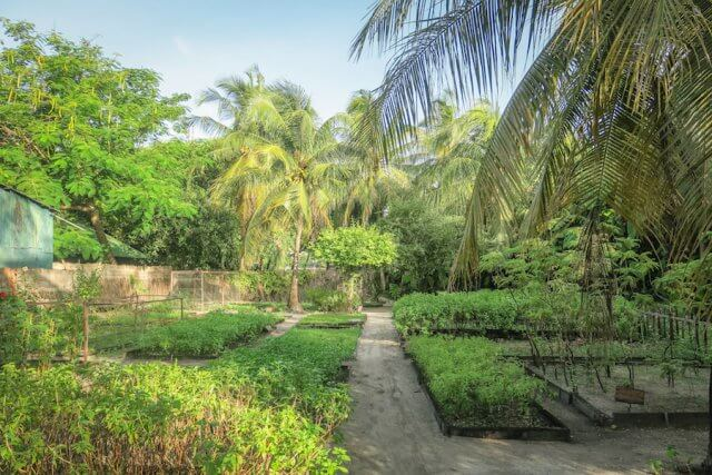 Malediven Reise Coco Palm Dhuni Garten
