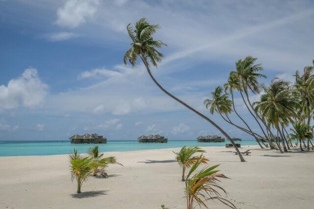 Malediven Urlaub Gili Lankanfushi Palmen