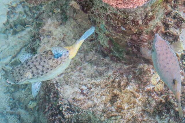 Malediven Urlaub Gili Lankanfushi Fische