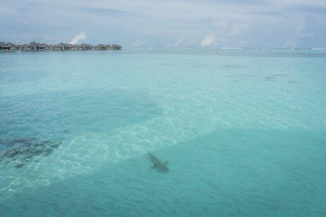 Malediven Urlaub Gili Lankanfushi Lagune