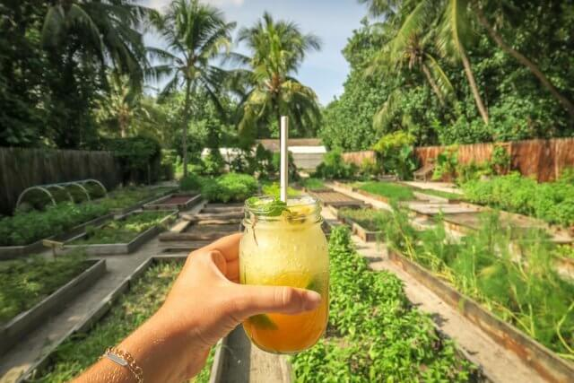 Malediven Urlaub Gili Lankanfushi Organischer Garten