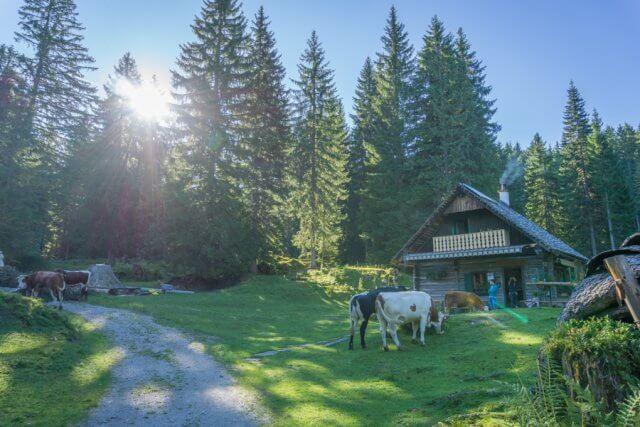 Oberoesterreich Dachstein Salzkammergut Loeckenmoos Kuh Huette