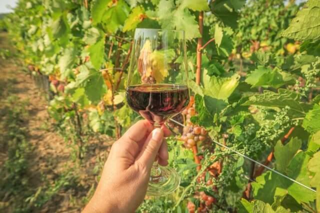 Baden bei Wien Wein