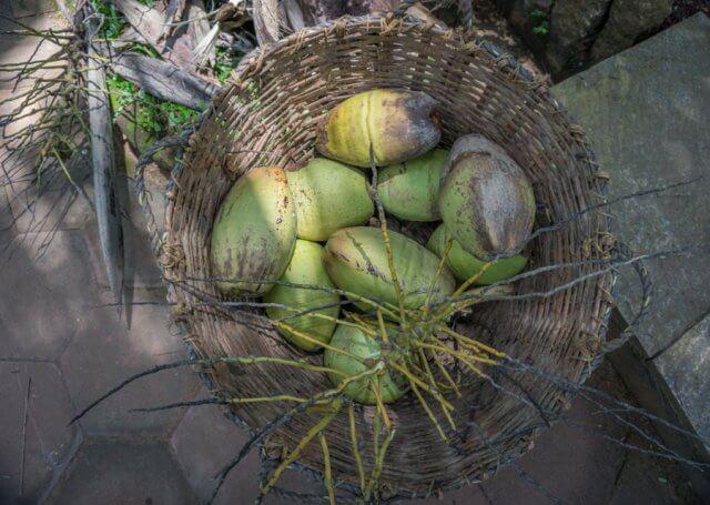 Kerala Ayurveda Kur Südindien Kokosnüsse