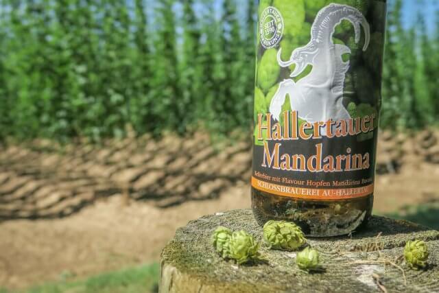 Ausflugsziele Bayern Hallertau Hopfen Bier