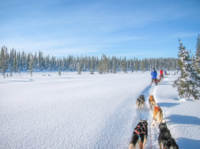 Lappland im Winter Husky Tour