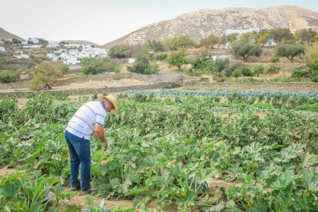 Sifnos Griechenland Narlis Farm
