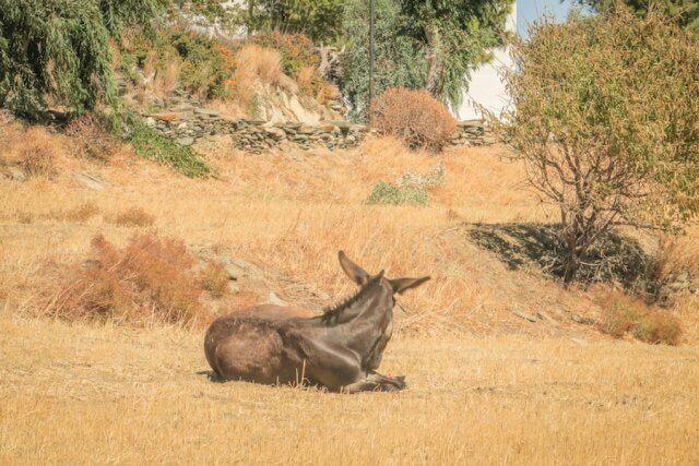 Sifnos Griechenland Wandern Esel