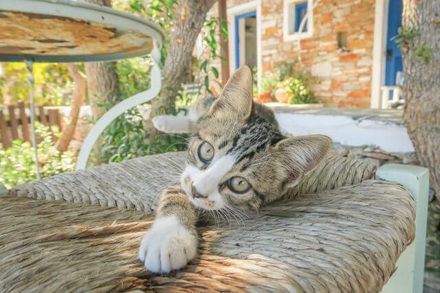 Sifnos Griechenland Windmill Bellavista Hotel Katze