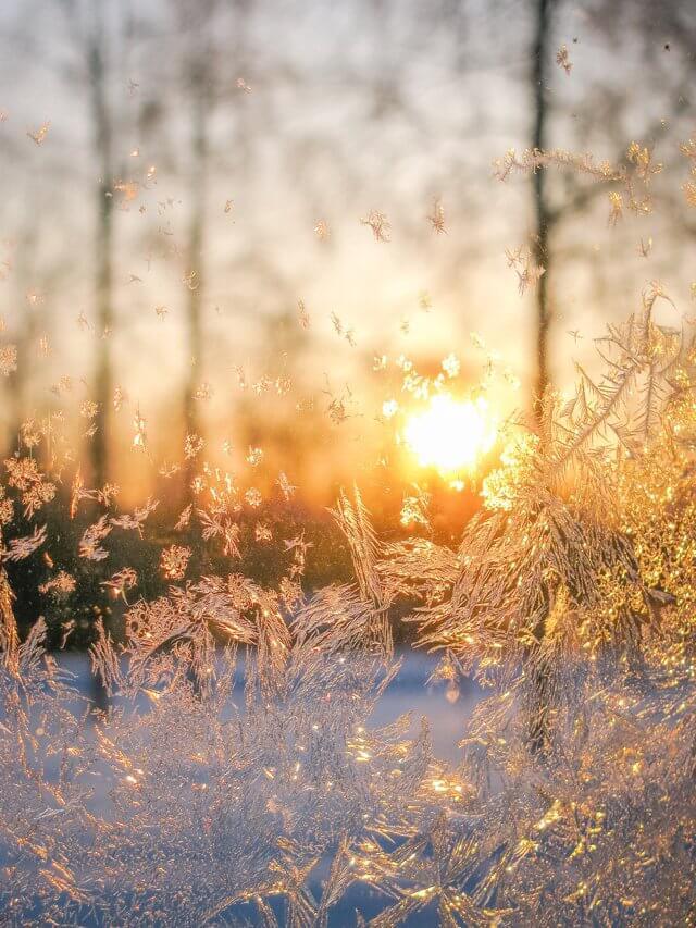 Lappland im Winter Eiskristalle