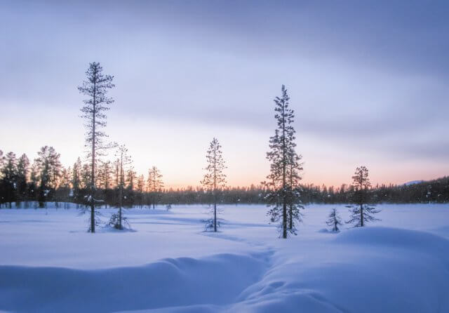 Lappland im Winter Pallas-Ylläs Nationalpark