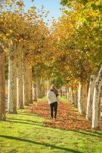 Navarra Spanien Bodega Otazu Pamplona Weingut Herbst