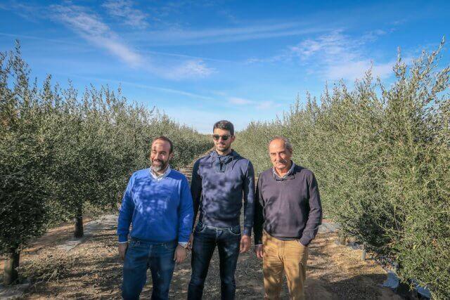 Navarra Spanien Artajo Olivenfarm Familie Oliven