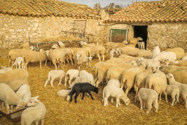 Navarra Spanien Bardenas Reales Landschaft Wüste Schafe Nationalpark