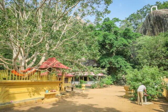 Sri Lanka Ayurveda Paradise Maho Ayurveda Kur Ausflug Tempel Bodhibaum
