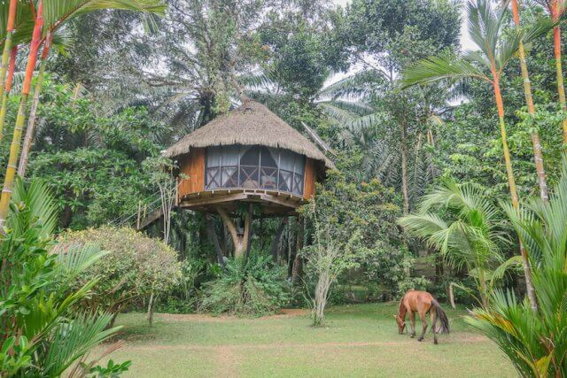 Sri Lanka Urlaub Hikkaduwa Huma Terra Green Lodge Baumhaus Pferde