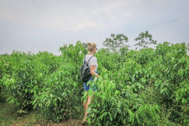 Sri Lanka Urlaub Hikkaduwa Teeplantage