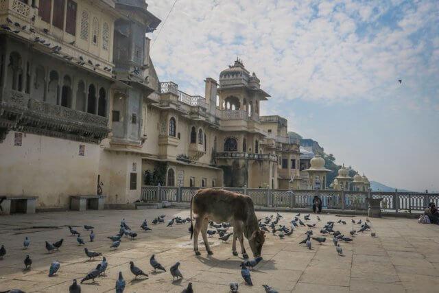 Indien Reisen Udaipur Kuh