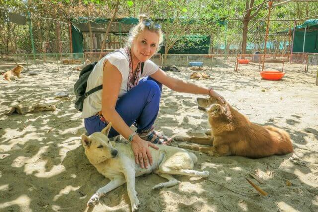 Indien Reisen Udaipur Animal Aid VolunteeringIndien Reisen Udaipur Animal Aid Volunteering
