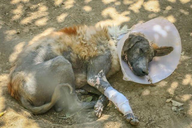 Indien Reisen Udaipur Animal Aid Hunde Tierheim Reude