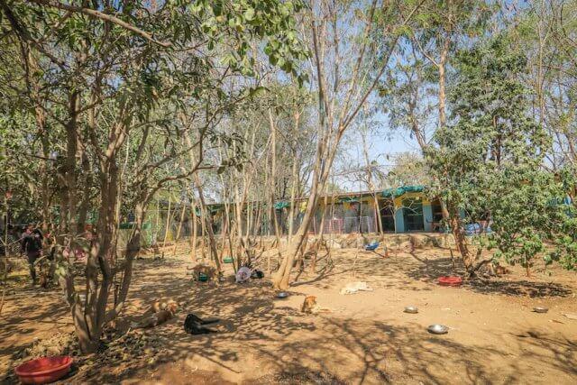 Indien Reisen Udaipur Animal Aid Hunde Tierheim