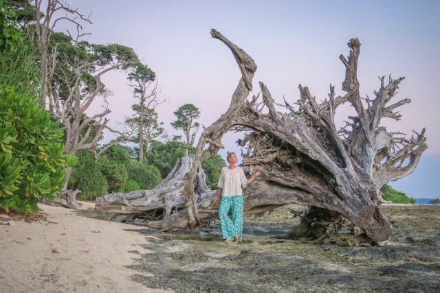Andamanen Inseln Sonnenuntergang Neil Island Ebbe Bäume