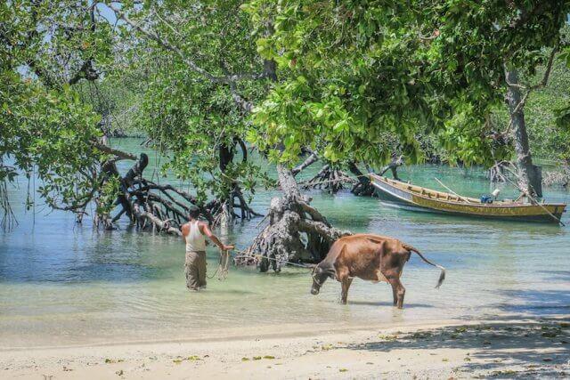 Andamanen Inseln Neil Island Silver Sand Beach Strand Kuh