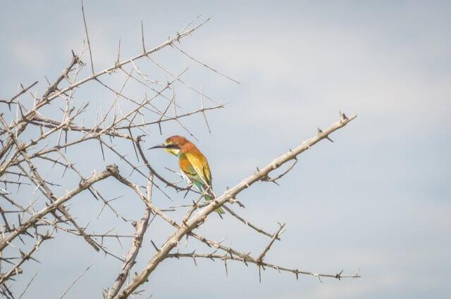 Botswana Okavango Delta Safari Birding