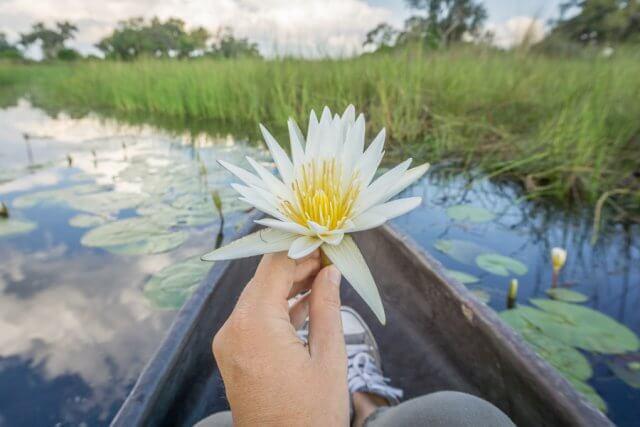 Botswana Okavango Delta Safari Boot Mokoro Wasserlilie