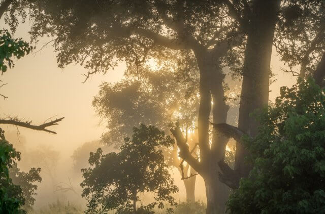Botswana Okavango Delta Safari Morgennebel
