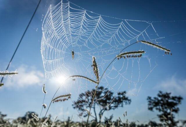 Botswana Okavango Delta Safari Spinne
