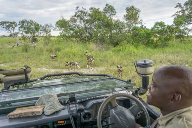Botswana Okavango Delta Safari Wild Dogs