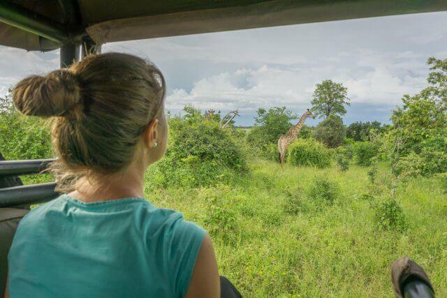 Botswana Safari Chobe Giraffe